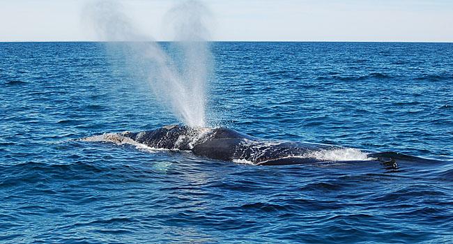 Peninsula Valdes, whales watching
