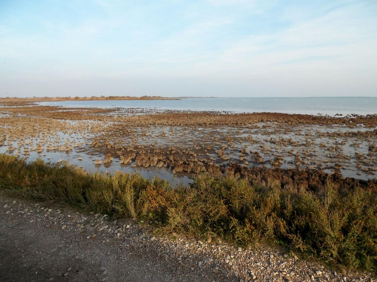 Delta del Rodano (foto F. Saracino)